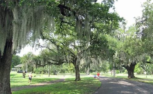 A walking trail lined by live oaks in Audubon Park